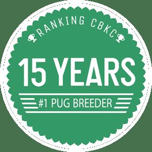 15-anos-anjos-pugs-ingles